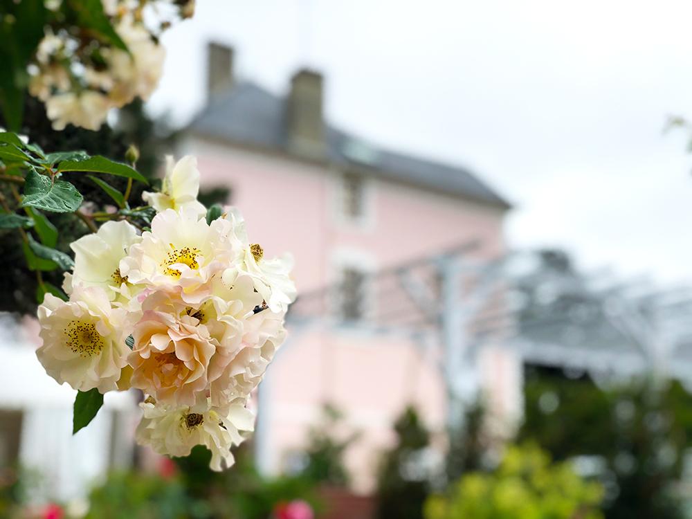 ディオールの庭 花